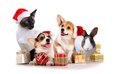 kerstfair-met-opbrengst-voor-de-dieren-jol